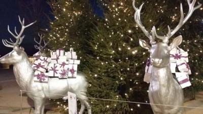 Comparte la Luz de tu Navidad1
