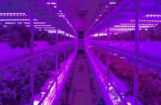 Showa Denko-LED- cultivo- huerto-iluminación LED-plantas ecológicas- SHIGYOTM