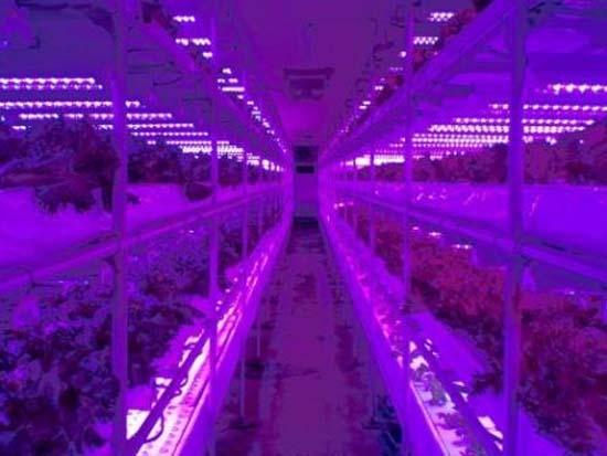 Grupo Japon S F Brica Plantas Ecol Gicas Iluminaci N Led