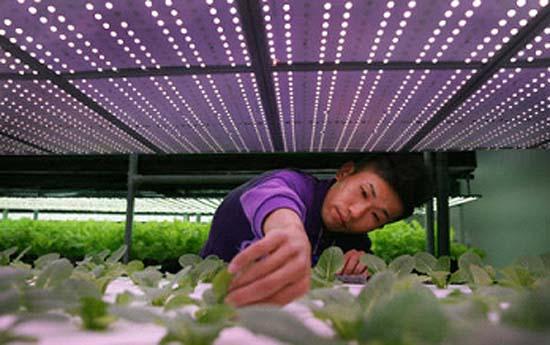 Iluminación- LED- Taiwán- huertos de interior- plantas