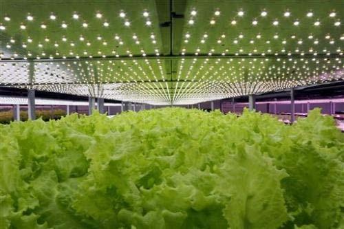 Huertos de interior libres de pesticidas en taiw n con led - Cultivo interior led ...