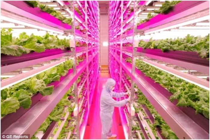 Huerta- cultivo vertical-LED- Spread-Japón-