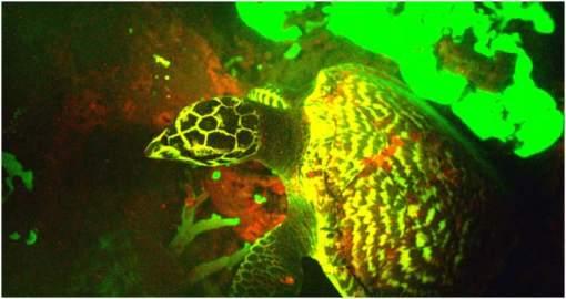 Biofluorescencia- biofluorescente-fluorescentes- color-luz-