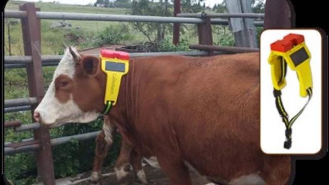 Telefónica - Cattle-Watch - ganadera - IoT