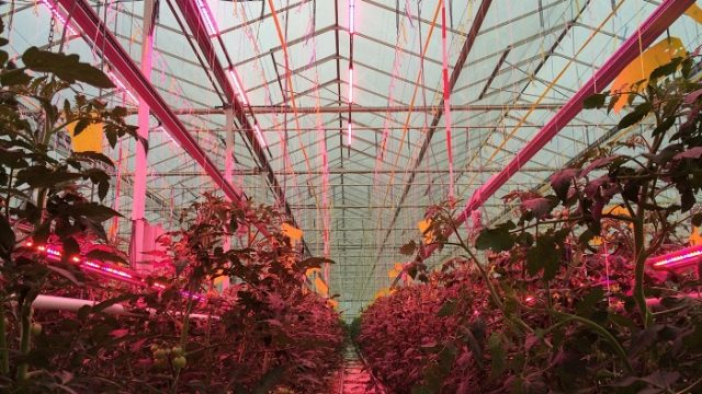 impacto ambiental – LED – cultivo - Light4Food - iluminación