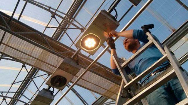 nuevo negocio - ALG - iluminación para horticultura - iluminación -LED