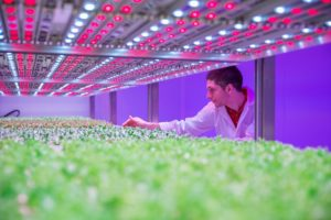 Philips GrowWise - LED - cultivo - investigación