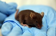1024px-Lab_mouse_mg_3216