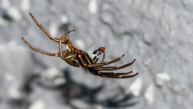 spider-1525655_1920