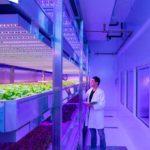 LED Horticultural, Philips Lighting