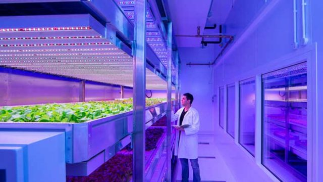 LED Horticultural, Philips Lighting