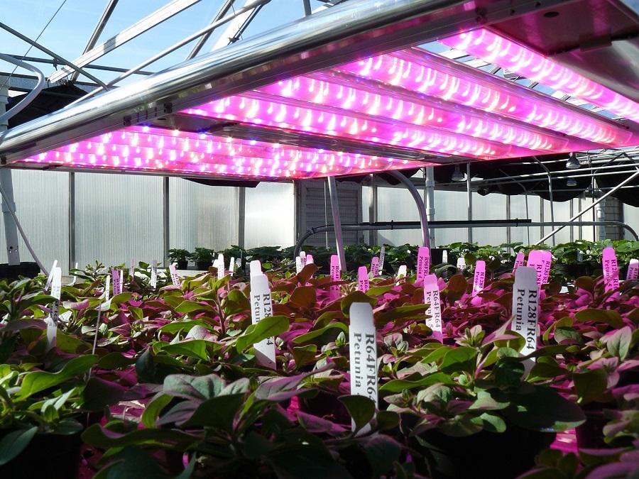Osram Opto Semiconductores, Osram, LED, iluminación, Horticultura