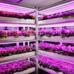 Osram, Osram Opto Semiconductores, iluminación, LED, Horticultura