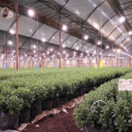 horticultural ,LED,lighting