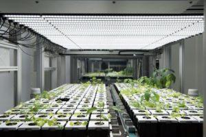 agricultura urbana