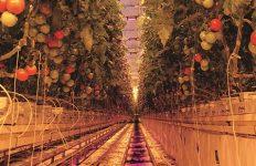 horticultura, osram,
