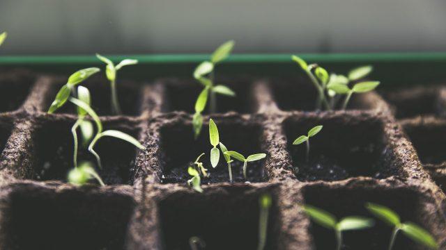 cultivo, cultivar, plantas, espacio,
