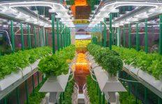 hortícola, invernaderos, iluminación hortícola, LED, mercado iluminación