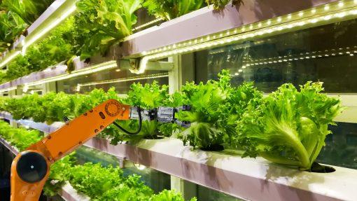Granjas verticales, agricultura vertical, iluminación LED,