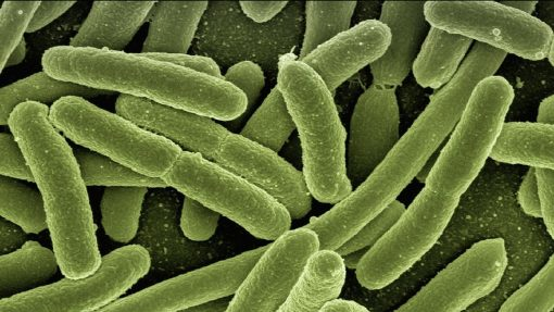 Bacteria, Universidad de Friburgo, Escherischia coli, Blade